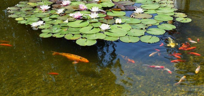 Tijd voor de voorjaarscheck; Fishhealth komt aan huis